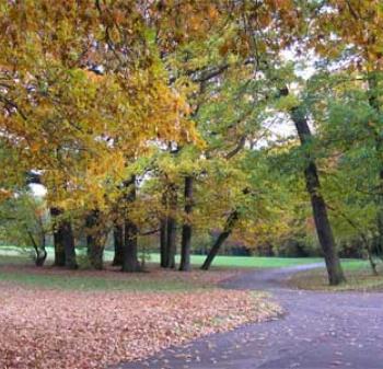 London park walks